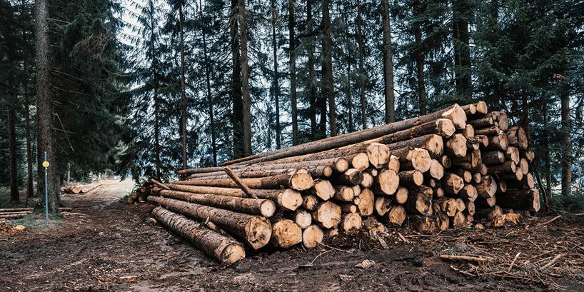 trees logged on ground